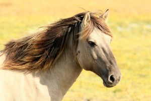 Zeer makkelijk online paardenvoer kopen